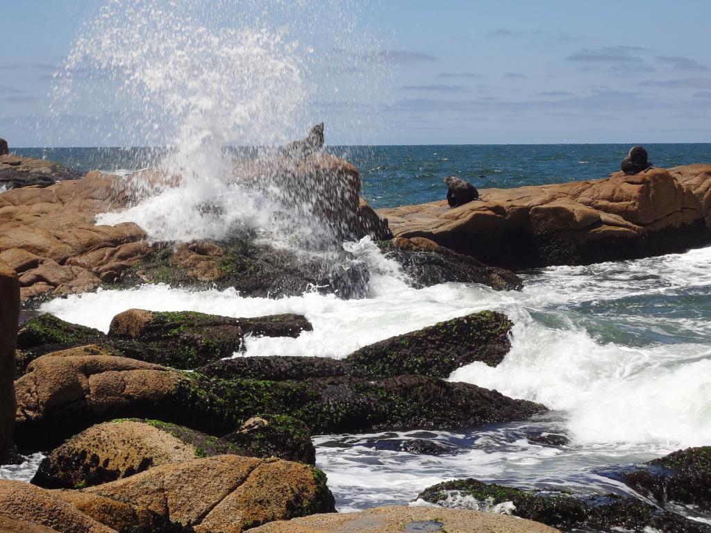 Seelöwen in Cabo Polonio