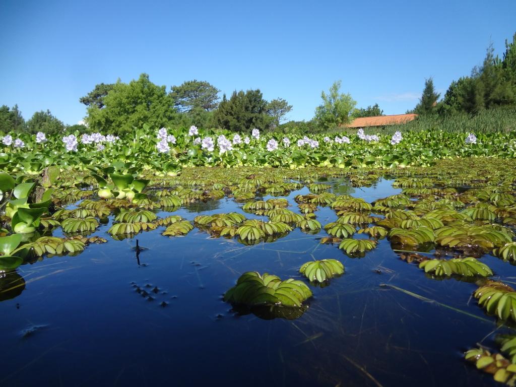 Lagune in Rocha