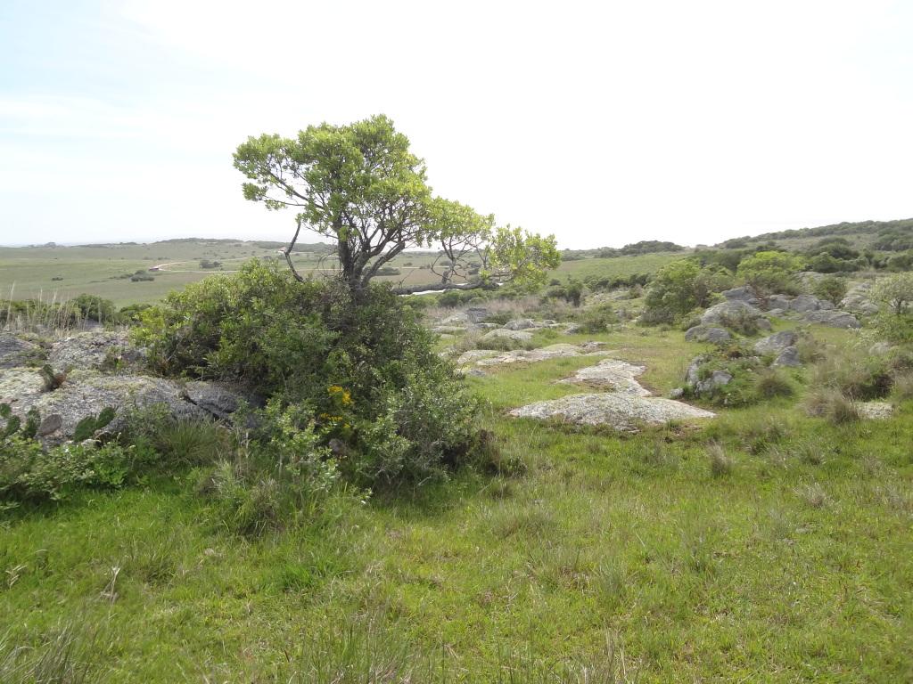 Sierra Landschaft in Uruguay