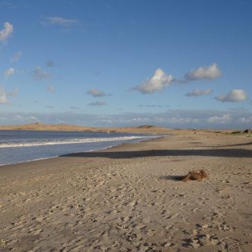 Fotos schiessen – Fotosafari in Uruguay