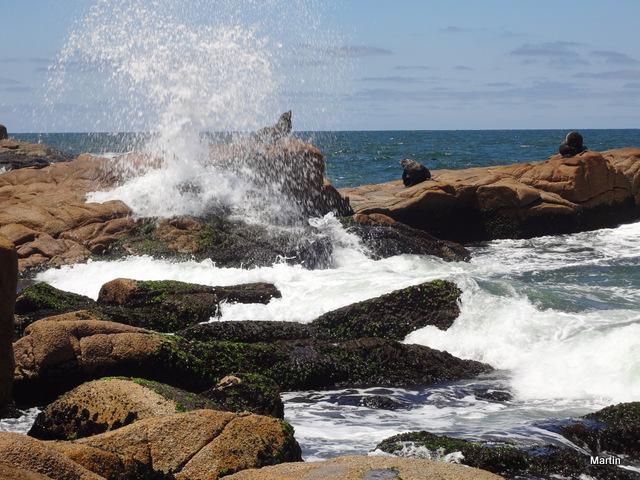 Seelöwen im Nationalpark Cabo Polonio Rocha Uruguay