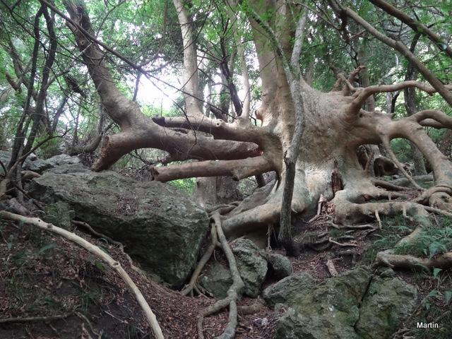 Kermessbeere Wald Uruguay