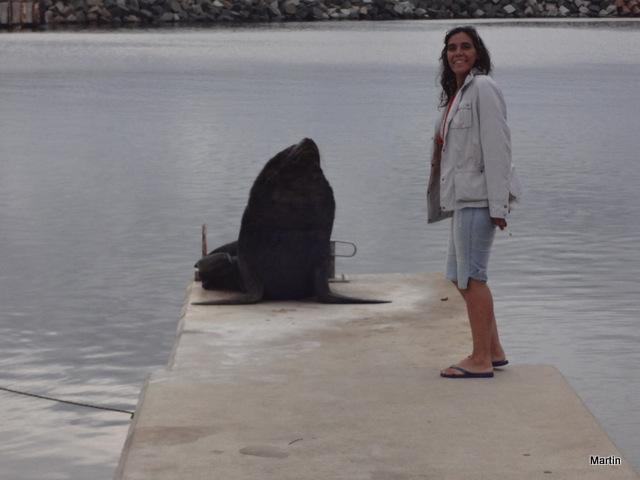 Auf Tuchfühlung mit Seelöwen