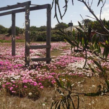 Authentische Uruguay Reise planen