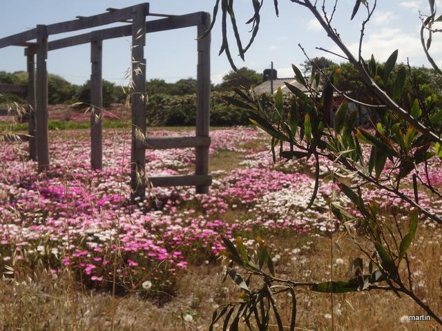 Uruguay Wildblumen