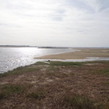 Uruguay Natur – Vogel- und Tierbeobachtung in der Laguna de Rocha