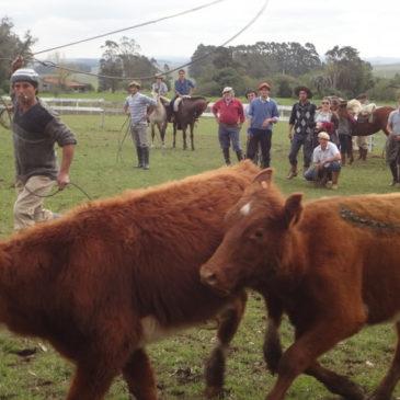 Wie man Uruguay durch Work & Travel Programme kennenlernen kann