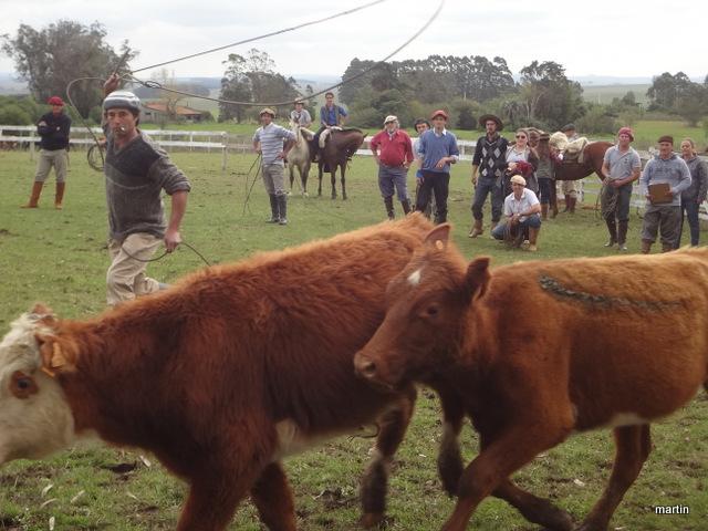 Rinderzucht Uruguay