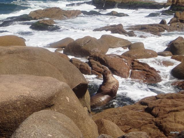 auf Augenhöhe mit Uruguay Seelöwen Cabo Polonio