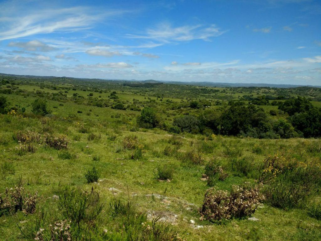 78 ha 3.000 U$s Uruguay Weideland Grundstücke Ackerland Viehzucht