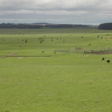 Ackerland und Farmland Preise in Uruguay – was gibt es zu beachten?