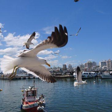 Uruguay Covid19 – wann wird das zweitsicherste Reiseland der Welt seine Grenzen öffnen?