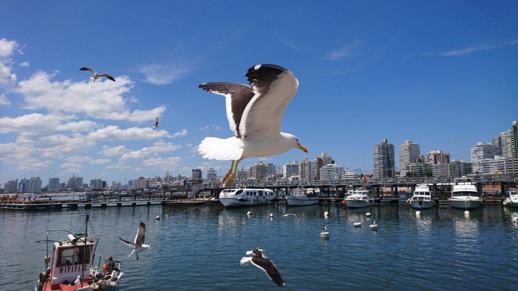 Leben in Punta del Este Uruguay
